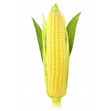 Семена кукурузы Реалли КС