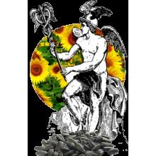 Семена подсолнечника Меркурий