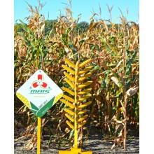Семена кукурузы ДМС 2911 (ФАО 290)