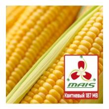 Семена кукурузы Квитневый 187 МВ (ФАО 180)