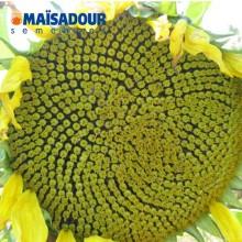 Семена подсолнечника МАС 87.А / MAS 87.A