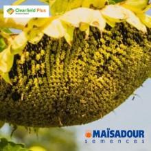 Семена подсолнечника МАС 86.СР / MAS 86.CP