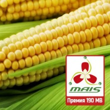 Семена кукурузы Премия 190 МВ (ФАО 190)