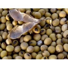 Семена сои на посев