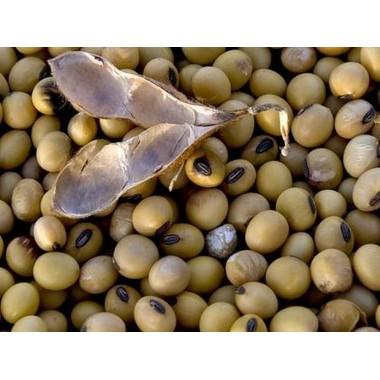 Семена сои сорт Валюта