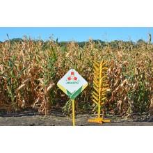 Семена кукурузы Визави (ФАО 190)