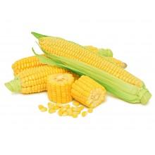 Семена кукурузы НС-2922