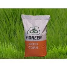 Семена кукурузы P0216