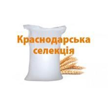 """Озимая пшеница """"Адель"""" Краснодарская селекция С\элита"""