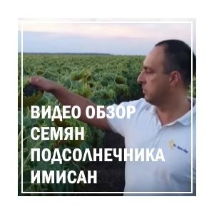 Видео обзор семян подсолнечника Имисан от ЮгАгролидер