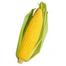 Семена кукурузы Портайл (ФАО 390)