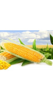 Семена кукурузы КС Лапери