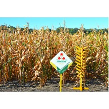 Семена кукурузы Залещицкий 191 СВ (ФАО 190)